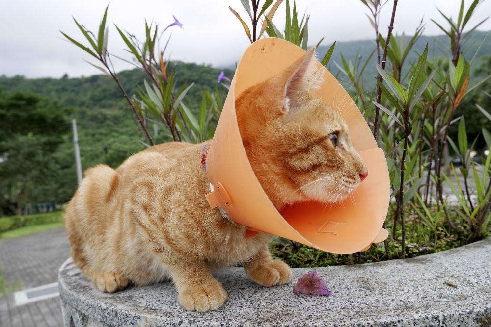 cat-in-cone-collar-web